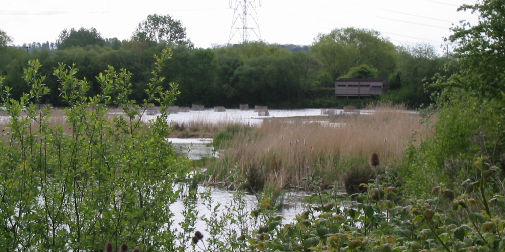 The Scrape at Rye Meads